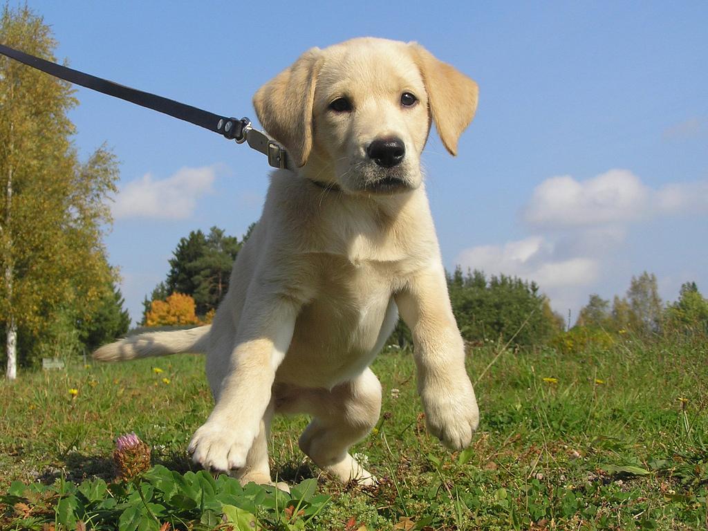 Puppy Coaching